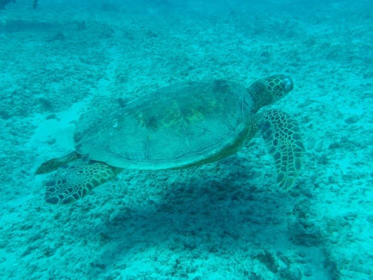 turtle-17918_960_720