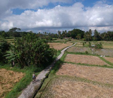 fietsen door de rijstvelden in Bali